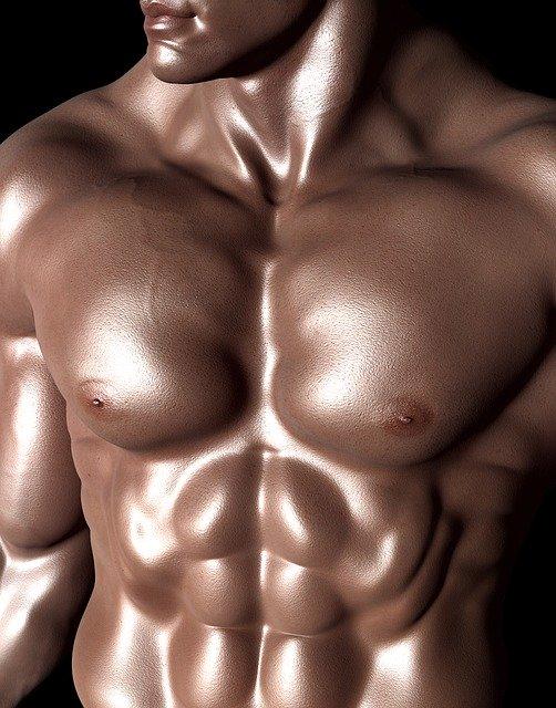 שרירי בטן בהמשך למבנה התא בגוף האדם - שיעור 4