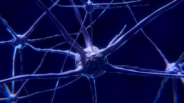מערכת העצבים – חוליות הגב – חוליות עמוד השדרה – שיעור 7