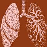 מערכת הנשימה - אנטומיה ומבנה מערכת הנשימה ופתולוגיות - שיעור 5