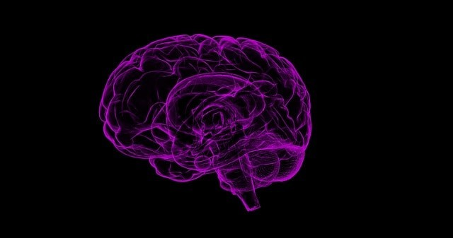 מערכת העצבים - מערכת הבנויה מקשר של חוטים - שיעור 8