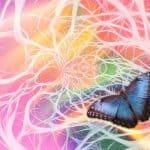 כל חלקי החוליות – חוליות מערכת העצבים - שיעור 9