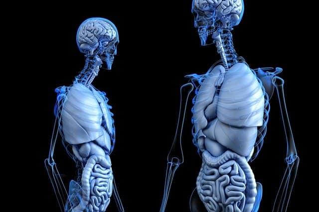 קורס פיזיולוגיה שיעור 2 – חזרה על מערכת העיכול