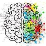 סיכום מערכת העצבים והמשך על השרירים הגביים - שיעור 10