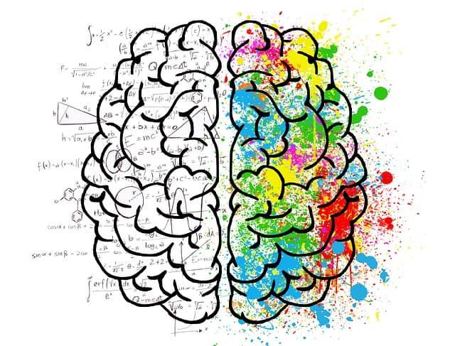 סיכום מערכת העצבים והמשך על השרירים הגביים – שיעור 10