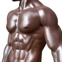 מבנה השריר - שיעור 6 קורס אנטומיה ללא עלות