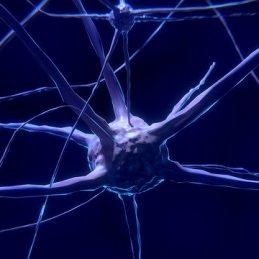 מערכת העצבים - חוליות הגב – חוליות עמוד השדרה - שיעור 7 מבנה התא ואנטומית הגוף - שיעור 2